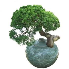 향나무/청자도자기