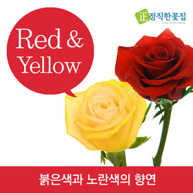 색상선택 꽃다발